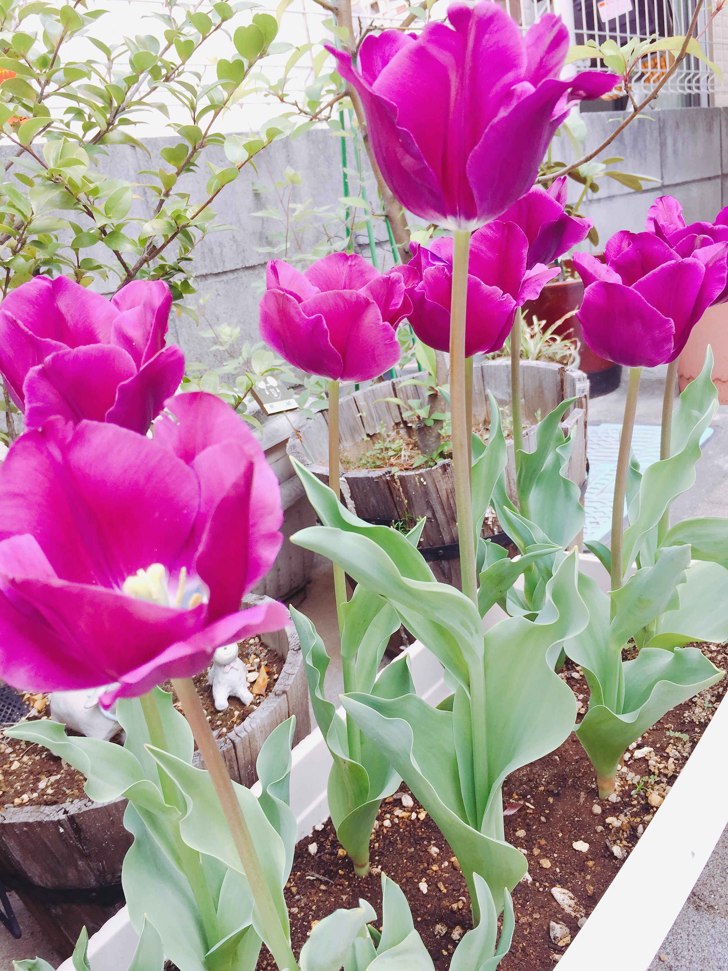 春になると楽しくなる庭づくり